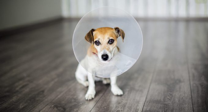 PET PROTECTION: UNLEASHING POTENTIAL IN AN UNDERSERVED MARKET
