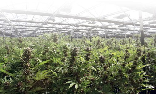 LEGAL CANNABIS: WHERE WE ARE AND WHERE WE'RE GOING