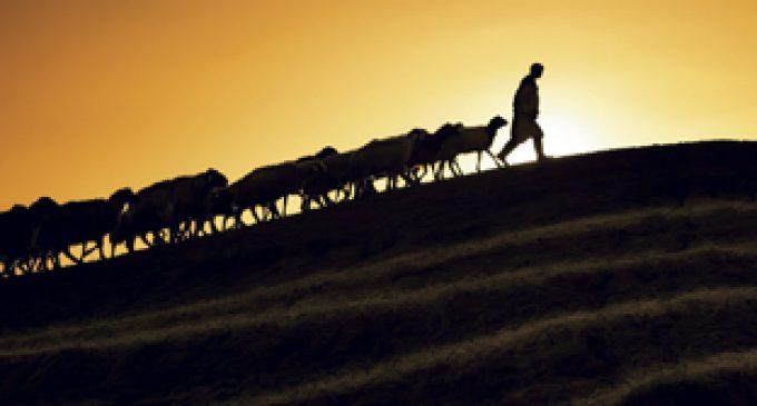 LEADERSHIP: THE WAY OF THE SHEPHERD