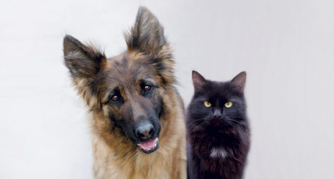 A POLICY FOR FIDO AND MITTENS